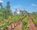 Trulli mit Weinfeldern im Valle d'Itria <br>© Kulturtouristik