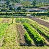 Kräutergarten um Ihre Residenz mit Blick auf Assisi und St.Maria Maggiore <br>© Kulturtouristik (Hotel)
