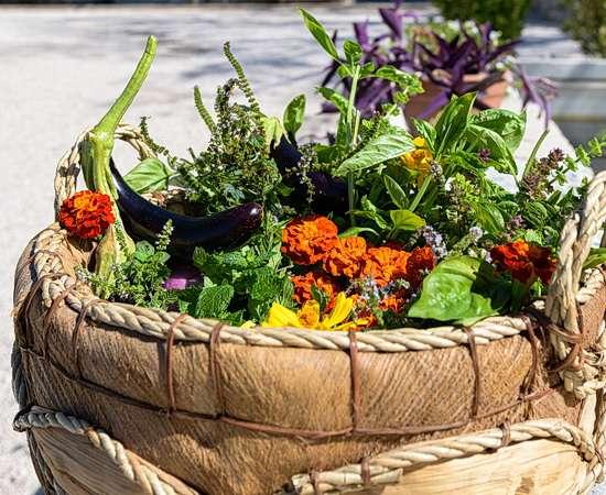 Zutaten für Ihren Kochkurs aus dem hauseigenen Garten <br>© Kulturtouristik (Hotel)
